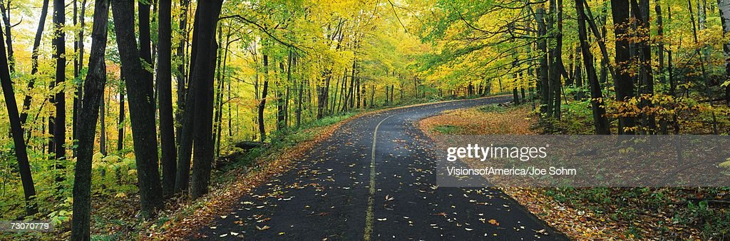 This is the Greylock State Reservation in autumn. There is a road that winds through the forest up to the right of the image. : Stock Photo