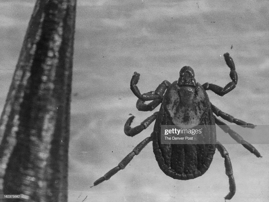 APR 3 1965 MAY 4 1965 This little insect ranging from the size of a pinhead to half an inch has a big bite He's a wood tick For an idea of his size...