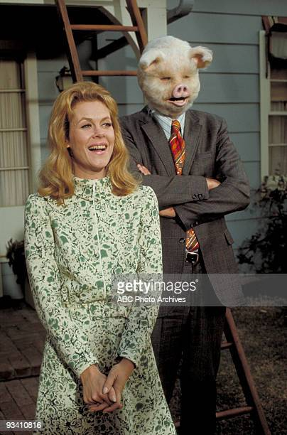 BEWITCHED 'This Little Piggie' Season Seven 2/25/71 Darrin's pig head became a great ad campaign for his new client Elizabeth Montgomery also starred
