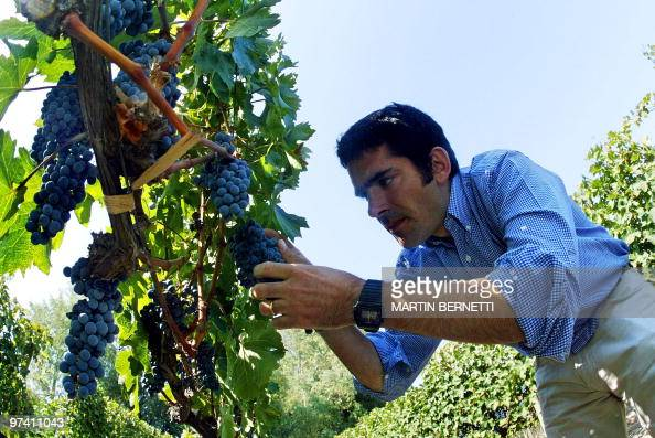 This March 11 2005 file photo shows Chilean enologist German Layon checking Cavernet Sauvignon stock grapes in the south of Santiago Chile's famous...