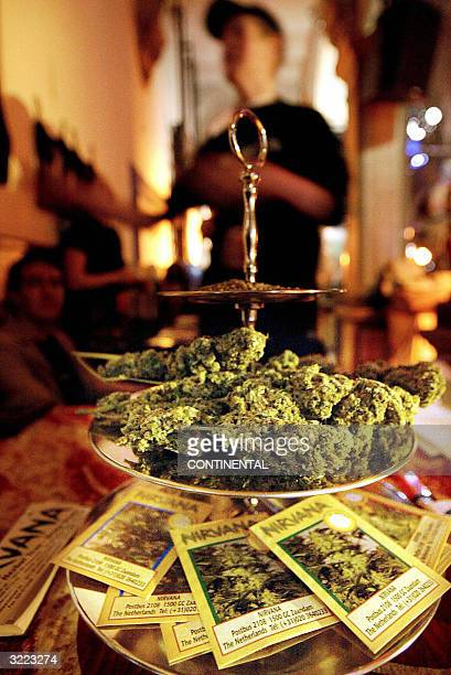 This November 2003 file picture shows cannabis at the yearly 'High Times Cannabis Cup' in Amsterdam The Netherlands' liberal policy towards socalled...