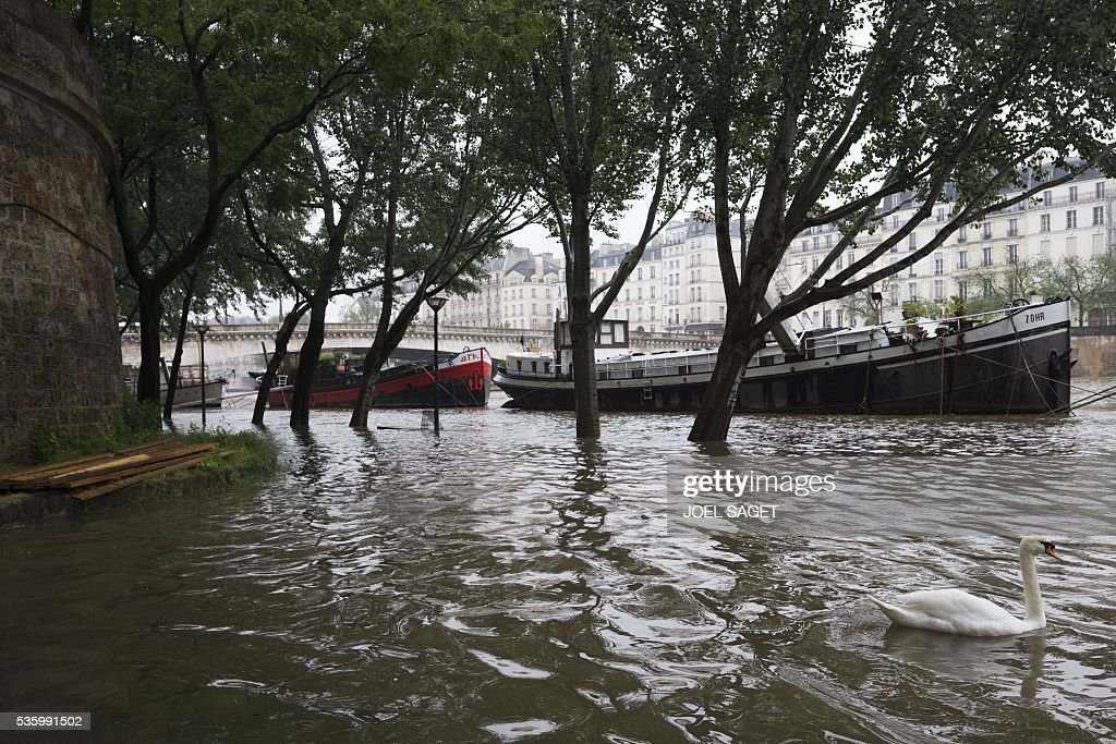 This photo shows barges and a swan onto the the river Seine in flood, following heavy rainfalls on May 31, 2016 in Paris. France's weather agency Meteo France maintained today 18 departments under orange alert for heavy rainfalls, which have already disrupted transports in the northeastern part of the country. / AFP / JOEL