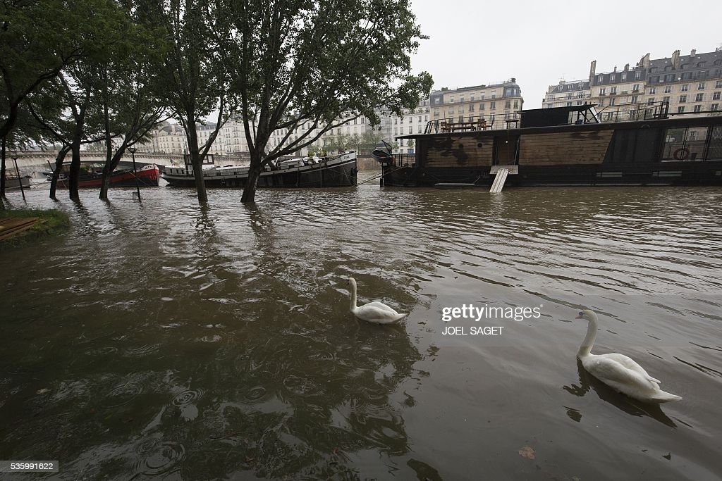 This photo shows barges and swans on the river Seine on Quai de la Tournelle after its banks became flooded following heavy rainfalls on May 31, 2016 in Paris. France's weather agency Meteo France maintained today 18 departments under orange alert for heavy rainfalls, which have already disrupted transports in the northeastern part of the country. / AFP / JOEL