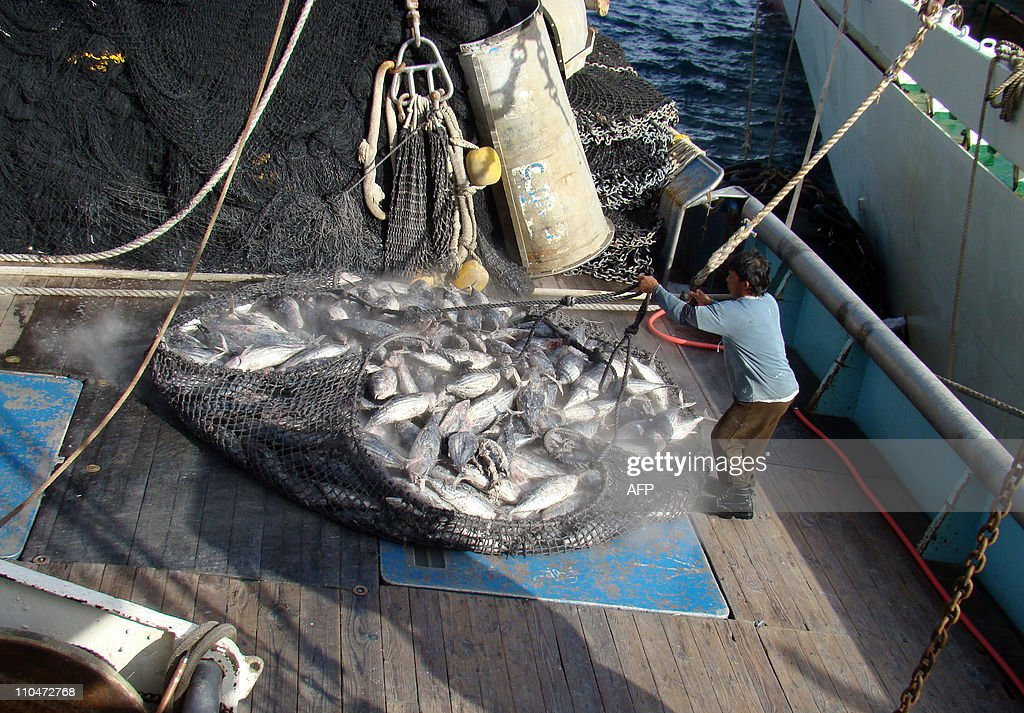 This photo taken in November, 2010 shows a net filled with tuna being hauled out of the freezer hold of the US-flagged fishing boat Raffaello for off-loading to a mother ship that will take the tuna to Asian canneries at the port in Majuro. A group of 17 Pacific island nations began putting pressure on the United States on March 19, 2011 to reshape a 23-year-old fisheries treaty. AFP PHOTO / GIFF JOHNSON