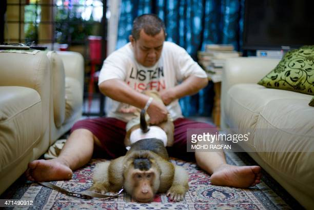 This photo taken on April 22 shows Jamil Ismail dressing his male monkey named 'JK' with Baju Melayu Malaysian cultural outfits at his house in Kuala...