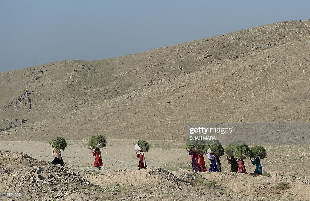 This photo taken on August 11, 2014 shows Kochi women carrying grass on their heads along the Kabul-Bagram road, north of Kabul. Poverty and an ongoing insurgency by the ousted Taliban still pose a threat to the stability of the country. AFP PHOTO/ SHAH Marai