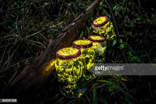 This photo taken on August 18 2015 shows fireflies kept in jars during an activity promoting protection of fireflies in Guangzhou in China's southern...
