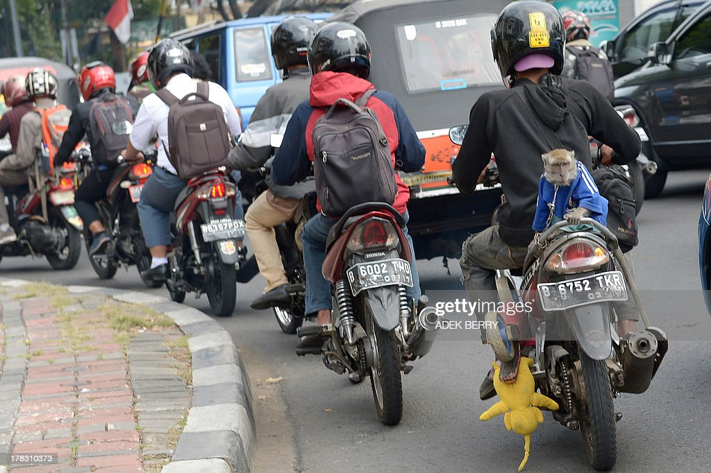 This photo taken on August 28, 2013 shows a circus monkey (R) riding on the back of a motorcycle in Jakarta. The street circuses are a very common way in Indonesia to earn money, although animal rights activists strongly oppose the practice.