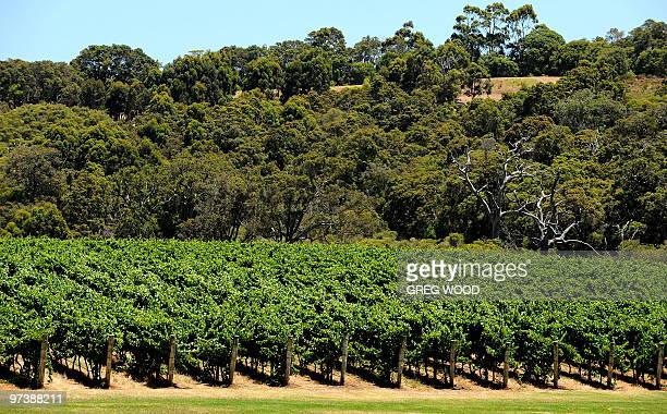 This photo taken on December 31 2009 shows vineyards in the internationally renowned Margaret River wine region in the southwest corner of Western...