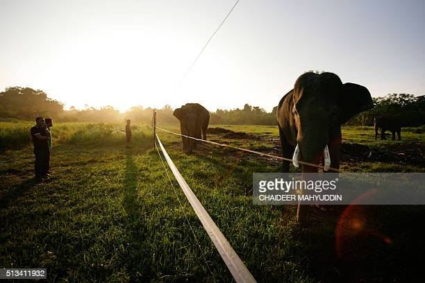 This photo taken on January 25 2015 shows residents looking at trained Sumatran elephants used for patrolling forested areas at Trumon a subdistrict...