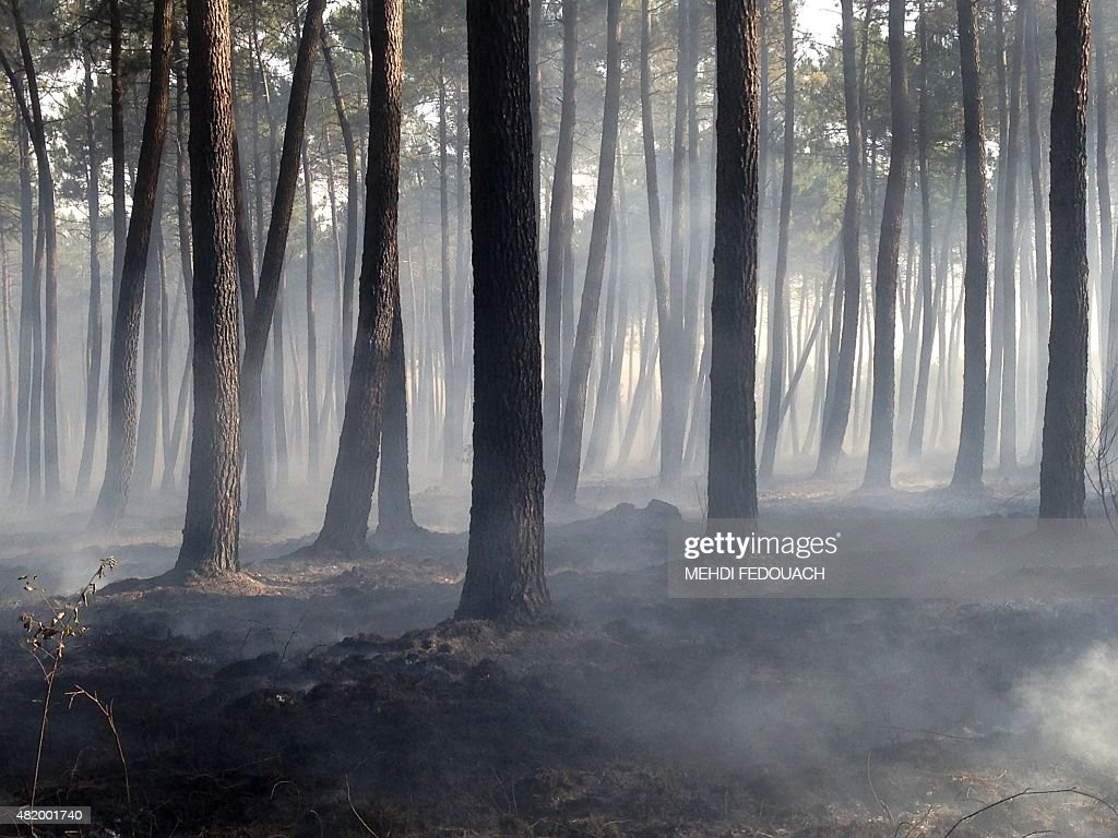 This photo taken on July 26, 2015 shows a burned area of forest in Pessac, near to St. Jean d'Illac, southwest France. On the morning of July 26, 500 firefighters 'restabilised' a wildfire in St. Jean d'Illac they have been battling since July 24, according to the prefect of the Aquitaine and Gironde regions, Pierre Dartout.