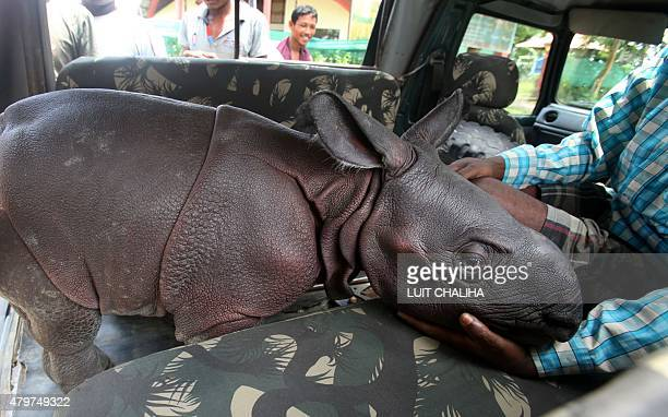 This photo taken on July 6 2015 shows a threeday old male Indian onehorned rhinoceros calf who was found wandering alone in Kaziranga National Park...