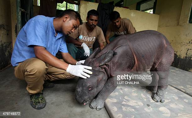 This photo taken on July 6 2015 shows a threedayold male Indian onehorned rhinoceros calf who was found alone wandering in Kaziranga National Park...