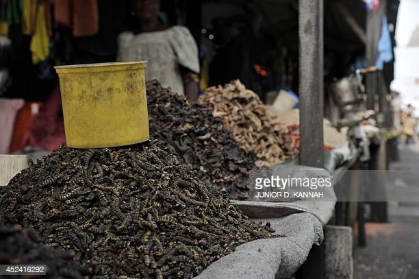 This photo taken on July 9 2014 shows caterpillars on sale at Kinshasa's Gambela market At Gambela market people can find insects for all tastes big...