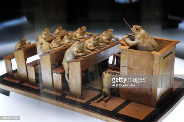 This photo taken on June 22 2017 shows a model of frogs attending school at the Frog Museum in EstavayerleLac western Switzerland The museum shows a...