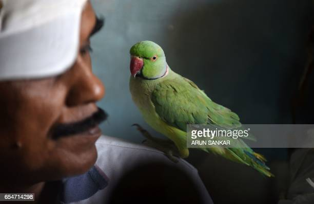 This photo taken on March 17 2017 shows Indian camera technician and parakeet enthusiast Joseph Sekar with a parakeet on his shoulder at his home in...