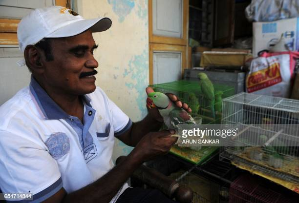 This photo taken on March 17 2017 shows Indian camera technician and parakeet enthusiast Joseph Sekar holding an injured parakeet he is caring for as...