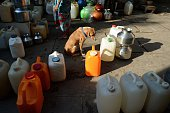 This photo taken on March 19 2015 shows a pet dog sitting near gallon jugs and plastic pots filled with water in a residential area in Mumbai A new...