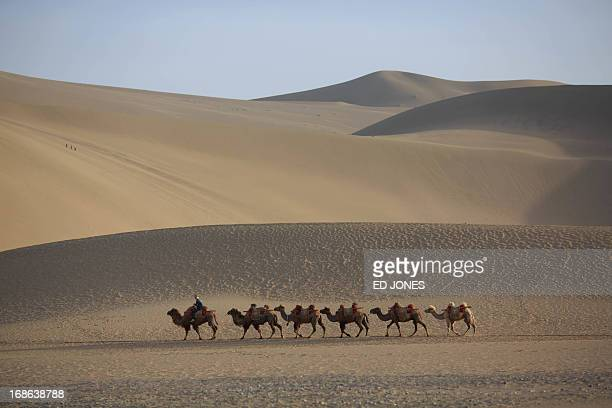 This photo taken on May 12 2013 shows camels walking near the Yueyaquan Crescent Lake in Dunhuang in China's northwestern Gansu province Formerly a...