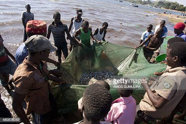 This photo taken on May 18 shows Malawian fishermen pulling up fish in their nets on the shores of Lake Malawi near the Makawa Fishing Village in the...