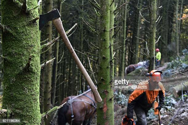This photo taken on November 2 2016 in the National Park of the Morvan near RoussillonenMorvan Burgundy shows an axe as forest rangers use draft...