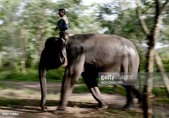 This photo taken on November 8 2016 shows a ranger atop a patrol elephant which belongs to one of three specialised elephant response units...