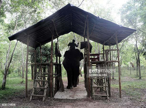 This photo taken on November 8 2016 shows an Indonesian ranger riding a patrol elephant which belongs to one of three specialised elephant response...