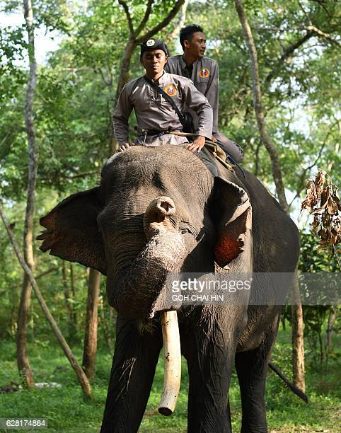 This photo taken on November 8 2016 shows rangers atop a patrol elephant which belongs to one of three specialised elephant response units...