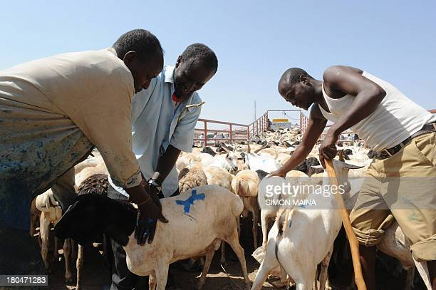 This photo taken on September 11 shows traders preparing to load goats and sheep ready for export into a truck at the biggest livestock market in...