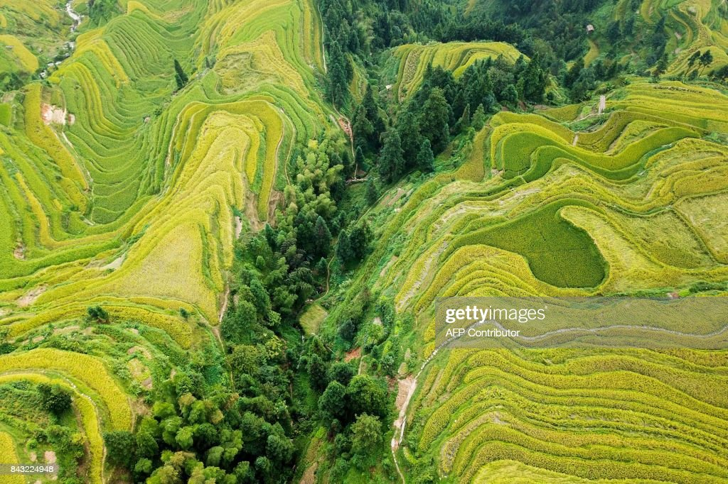 TOPSHOT - This photo taken on September 4, 2017 shows an aerial view of terraced rice fields in Jiache village in Congjiang county, China's southwestern Guizhou province. / AFP PHOTO / STR / China OUT