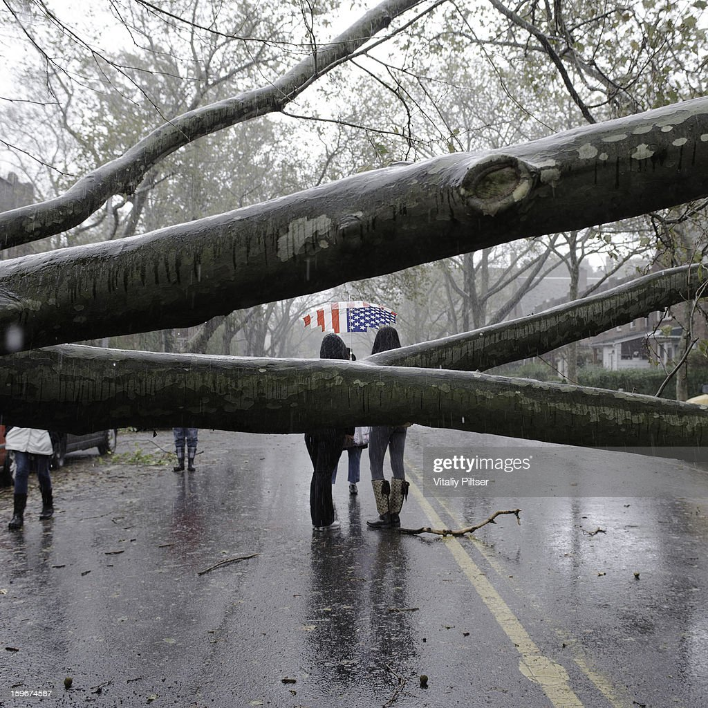 CONTENT] This photo was taken the morning after Super Storm Hurricane Sandy hit New York City. It was taken in Sunnyside Queens. Many trees were downed by heavy winds overnight and people came out to check on the wreckage of their cars and neighborhood the following morning. Two women were out, one carrying an American Flag umbrella symbolizing our strength as it shone through the branches of a massive tree laying across a wide 2 lane road.