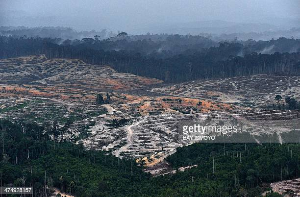 This photograph taken on February 24 2014 during an aerial survey mission by Greenpeace in Central Kalimantan province on Indonesia's Borneo Island...