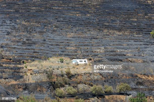 This photograph taken on July 19 shows a caravan surrounded by burned landscape in the village of Zrnovnica near the Adriatic coastal town of Split...