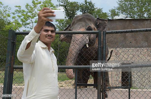 This photograph taken on June 30 shows a visitor taking a selfie next to Pakistani elephant Kaavan at the Marghazar Zoo in Islamabad Pakistan's...
