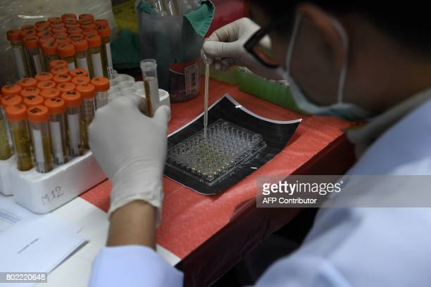 This photograph taken on May 19 2017 shows a lab technician sorting urine samples for testing for flatworms at Khon Kaen University in the...