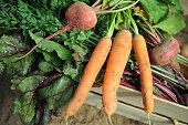 This picture shows home grown organic carrots on September 9 2014 in Plouescat western of France AFP PHOTO / FRED TANNEAU