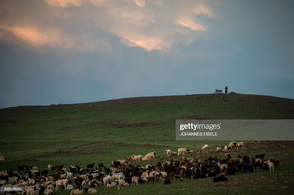 This picture taken early on June 29, 2016 shows Pagvajaviin Shatarbaatar watching his herd in the Gobi desert near Luusiin. Mongolians went to the polls across their sprawling, sparsely-populated country on June 29 as it struggles to benefit from its vast natural resources amid disputes over foreign investment and slumping demand from neighbouring China. Across the country -- more than twice the size of France, but with a population of only three million -- trucks with mobile ballot boxes crisscrossed the vast steppe to enable the sick and elderly to vote, while herders and others streamed to polling stations in set up in gers,traditional Mongolian tents. Mongolia-election-politics by Ben Dooley