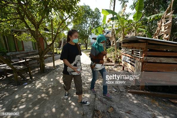 This picture taken in Kendawangan West Kalimantan on Borneo island on February 14 2017 shows veterinarian Ulfa Septiana holding Vena a sevenmonthold...