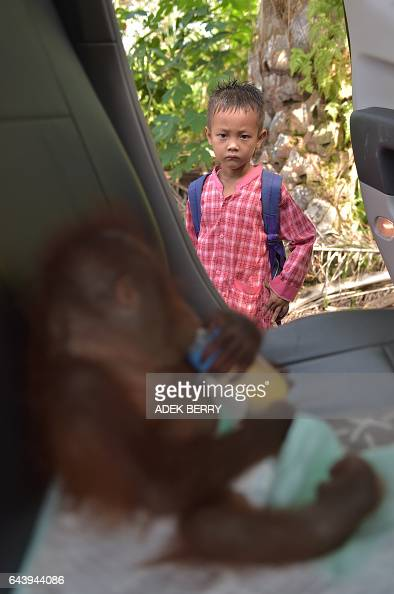 This picture taken in Kendawangan West Kalimantan on Borneo island on February 14 2017 shows a school boy looking at Vena a sevenmonthold baby...