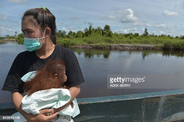 This picture taken in Kendawangan West Kalimantan on Borneo island on February 14 2017 shows Devi Sumantri holding Vena a sevenmonthold baby...