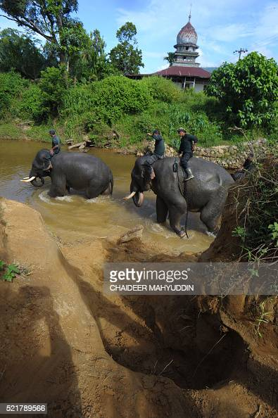This picture taken in Leuser National park South Aceh on April 16 2016 shows Indonesian mahouts and elephants conducting a patrol along Leuser...