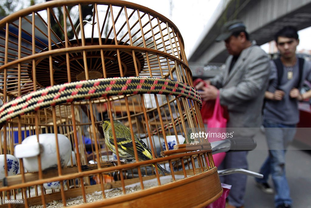 This picture taken on April 13, 2013 shows a vendor waiting for custormers at a bird market in Beijing. China's H7N9 bird flu virus spread to a new province on April 14, with state media reporting two human cases in central Henan just west of the area where the disease has been centred. CHINA