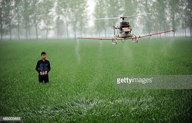 This picture taken on April 15 2014 shows a man controlling a drone to spray pesticides on a farm in Bozhou central China's Anhui province China's...