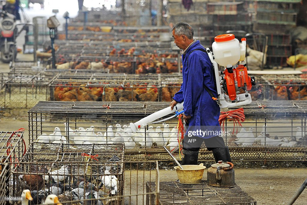This picture taken on April 6, 2013 shows a man sterilizing the enclosure of on sale chickens in a poultry market in Wuhan, central China's Hubei province.The World Health Organisation said on April 8 that there is no evidence China's bird flu is spreading between humans, but jitters over the outbreak that has killed six people saw airline and tourism shares slump. CHINA