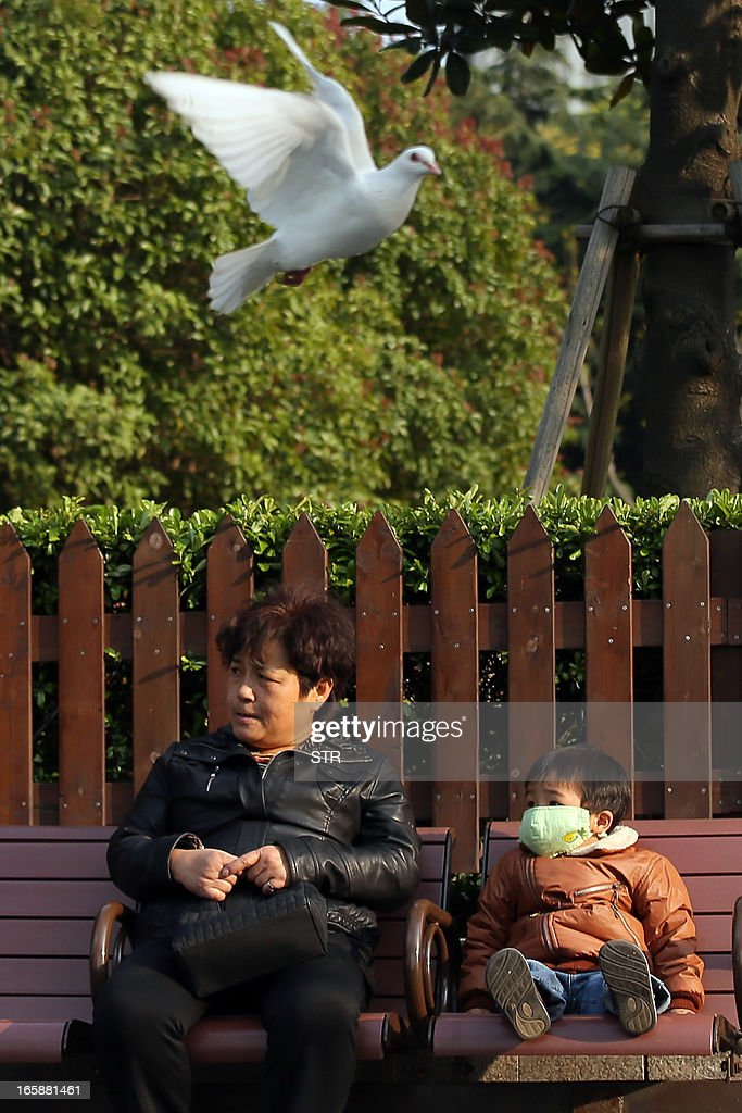 This picture taken on April 6, 2013 shows a pigeon flying past as a Chinese woman and a child sit on a bench at a park in Shanghai. Cities in eastern China where an H7N9 bird flu outbreak has killed six people moved to prevent the virus from spreading by banning live poultry trade and culling fowl. CHINA