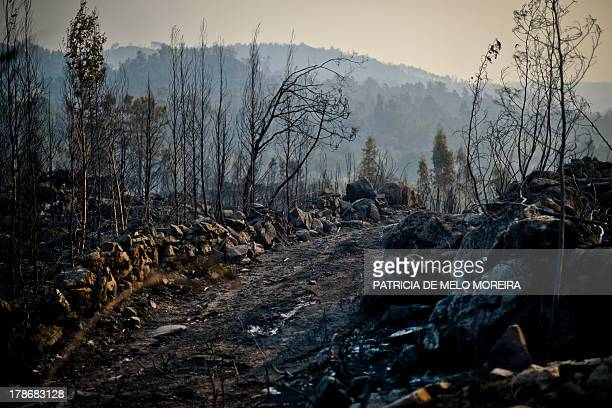 This picture taken on August 30 2013 shows a landscape in the Caramulo mountain central Portugal after a wildfire Firefighters battled wildfires on...