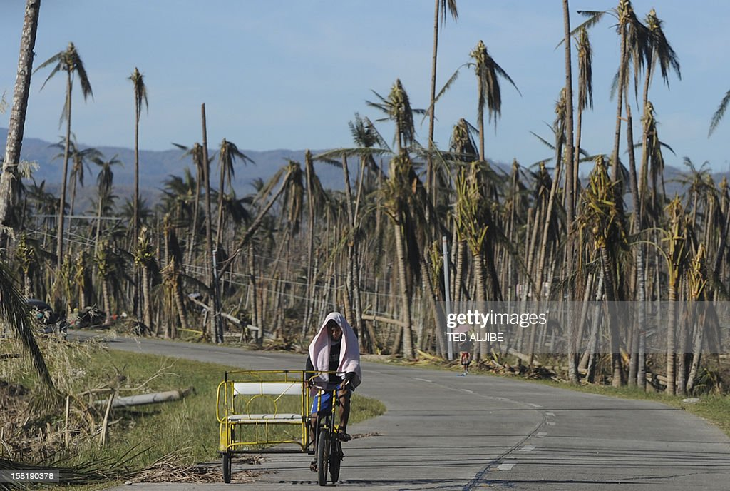 This picture taken on December 10, 2012 shows a resident riding his tricycle past damaged coconut trees along a higway in Cateel town, Davao Oriental in the aftermath of Typhoon Bopha. The United Nations launched a 65 million USD global appeal on December 10 to help desperate survivors of a typhoon that killed more than 600 people and affected millions in the southern Philippines.