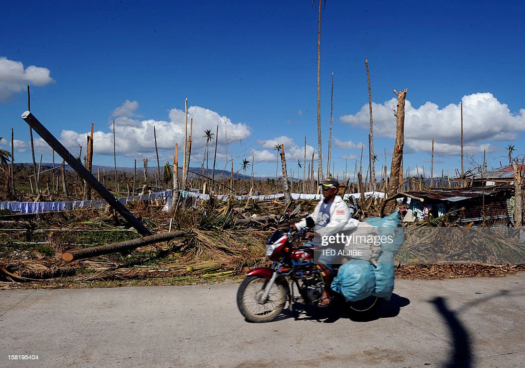 This picture taken on December 11, 2012 shows a motorist loaded with goods riding past toppled coconut trees along a highway in Baganga town, Davao Oriental province on December 11, 2012 in the aftermath of Typhoon Bopha. The United Nations launched a 65 million USD global appeal on December 10 to help desperate survivors of a typhoon that killed more than 600 people and affected millions in the southern Philippines.