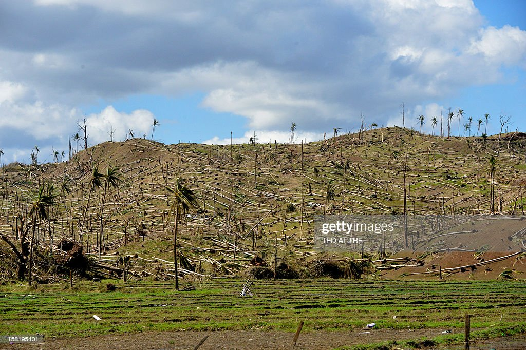 This picture taken on December 11, 2012 shows uprooted coconut trees in the mountains of Cateel town, Davao Oriental province in the aftermath of Typhoon Bopha. The United Nations launched a 65 million USD global appeal on December 10 to help desperate survivors of a typhoon that killed more than 600 people and affected millions in the southern Philippines.
