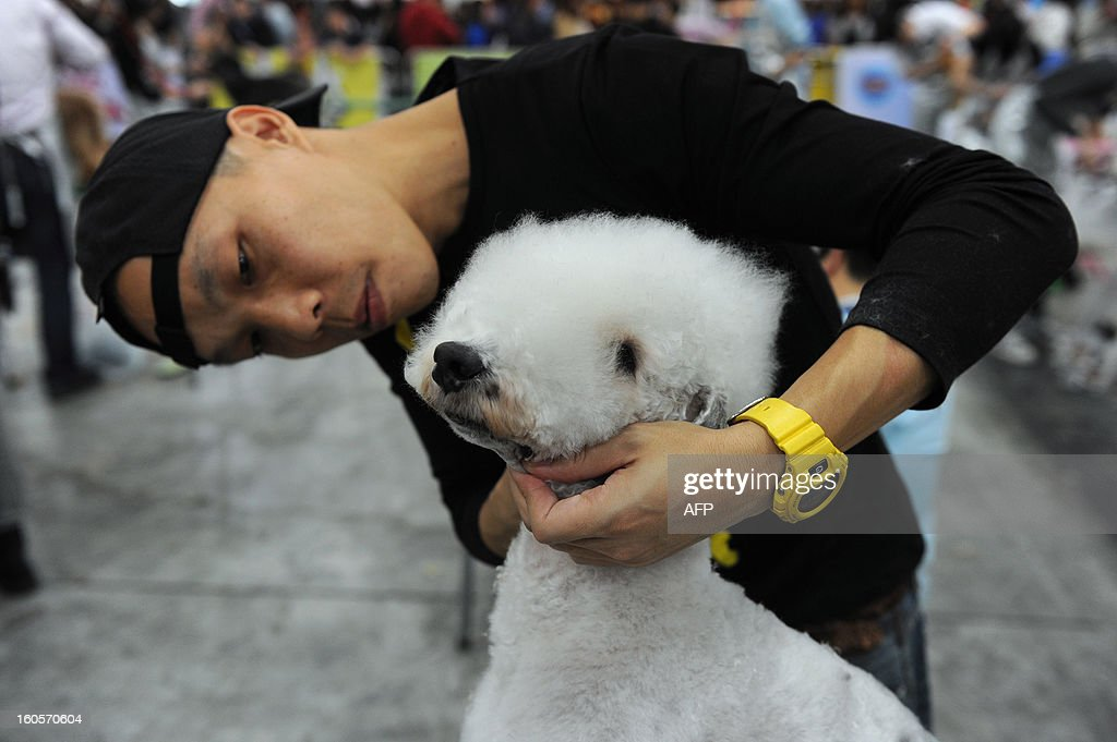 This picture taken on February 2, 2013 shows a man grooming a Bedlington Terrier dog at the eighth Hong Kong Pet Show at the Hong Kong Convention and Exhibition Centre. Hong Kong has the second highest pet market in Asia, falling behind Japan, according to a statement released by the organisers of the pet show, which runs from February 1-3. AFP PHOTO / ANTHONY WALLACE
